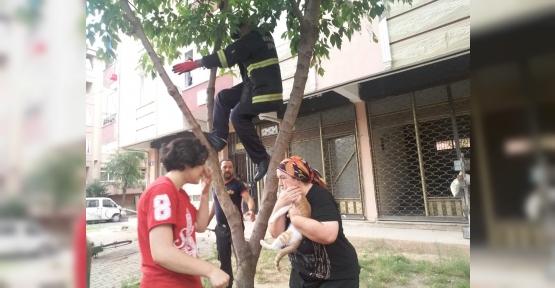 Ağaçtan İnemeyen Kediyi  İtfaiye Kurtardı