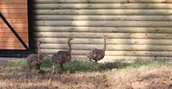 Uzuntarla Tabiat Parkı Ormanya'ya  Üç Yeni Genç Üye