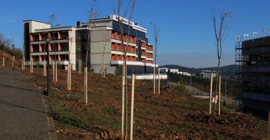 Umuttepe Kampüsü 10 Bin Ağaçla Yeşilleniyor
