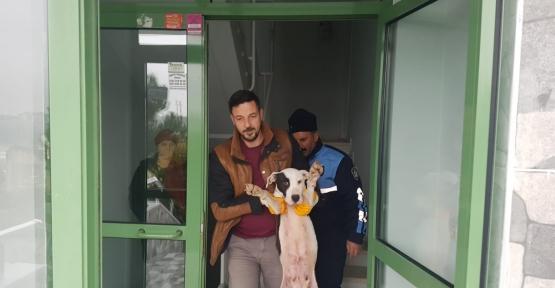 Yaralı Köpeğe Büyükşehir Sahip Çıktı
