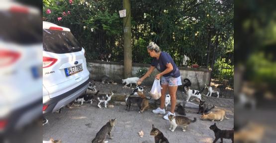 13 Yıldır Sokak Hayvanlarını  Besliyor