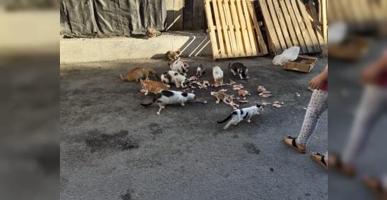 Kedileri Beslerse  Ceza yazılacak