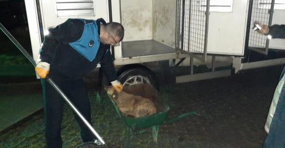 Yaralı Kedi Ve Köpekler Bakımevine Teslim