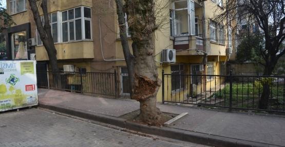 İzmit Belediyesinden Gövdesi Çürüyen Ağaca Müdahale