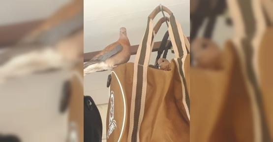 Kuşlar Yuva İçin Çantayı Seçtiler