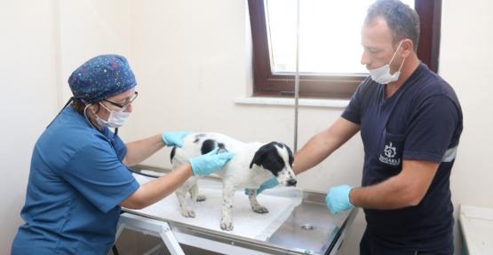 4 ayda bin 809 sokak hayvanı  tedavi edildi