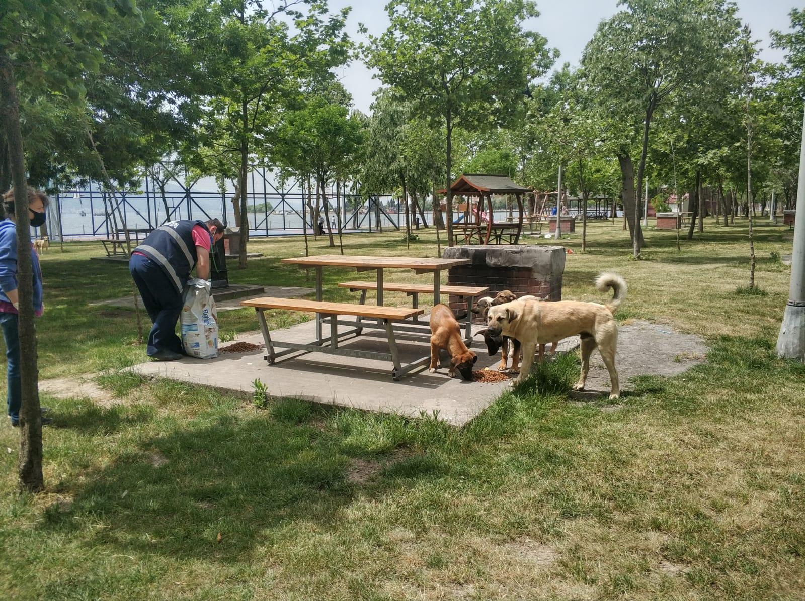 Körfez Belediyesi'nden Sokak Hayvanlarına Mama Ve Su Desteği