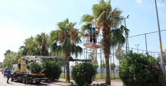 Karamürsel Sahilindeki Palmiyeler Bakımdan Geçti