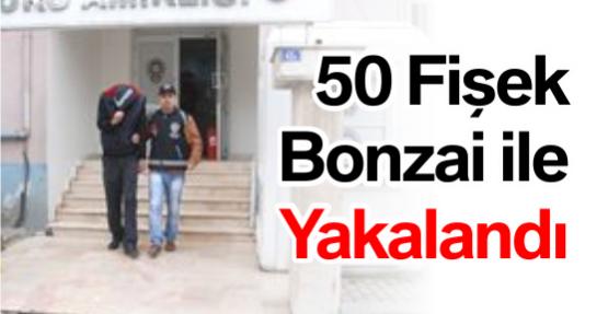 50 Fişek Bonzai ile Yakalandı
