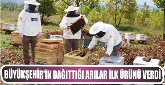 Büyükşehir'in dağıttığı arılar ilk ürünü verdi