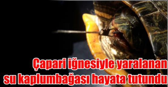 Çapari iğnesiyle yaralanan su kaplumbağası hayata tutundu