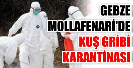 GEBZE MOLLAFENARİ'DE KUŞ GRİBİ KARANTİNASI