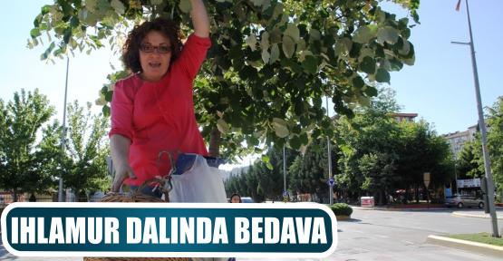 IHLAMUR DALINDA BEDAVA