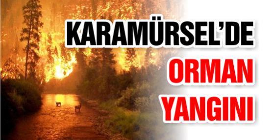 KARAMÜRSEL'DE ORMAN YANGINI