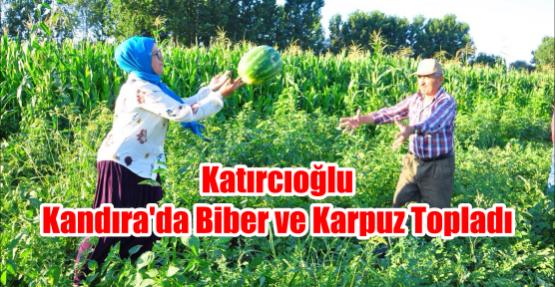 Katırcıoğlu Kandıra'da Biber ve Karpuz Topladı