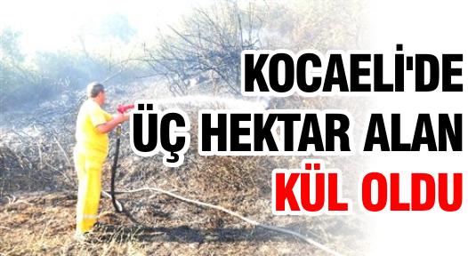 Kocaeli'de Üç Hektar Alan Kül Oldu