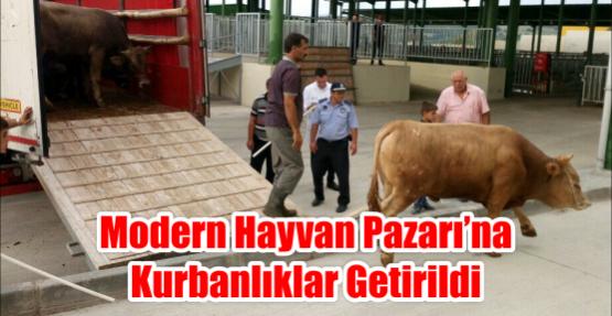 MODERN HAYVAN PAZARI'NA KURBANLIKLAR GETİRİLDİ