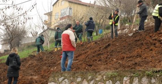 Sırrıpaşa'ya 500 ağaç dikilecek