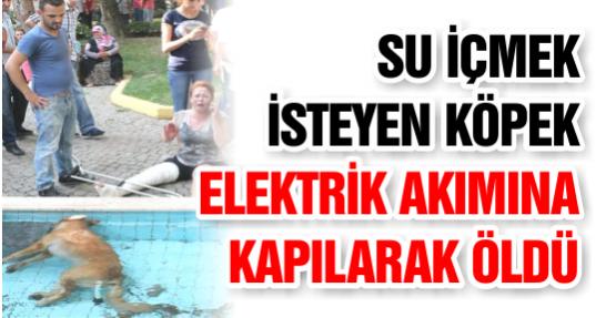 Süs Havuzundan Su İçmek İsteyen Köpek Elektrik Akımına Kapılarak Öldü