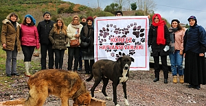 Körfez'de Sokak Hayvanlarına Mama Desteği