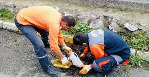 Körfez'de Ani Yağışlara Karşı Menfez Ve Mazgallar Temizlendi