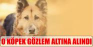 O KÖPEK GÖZLEM ALTINA ALINDI...