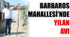 BARBAROS  MAHALLESİ'NDE  YILAN  AVI