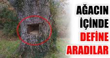 Ağacın içinde define aradılar!