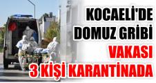 Kocaeli'de domuz gribi vakası: 3 kişi karantinada