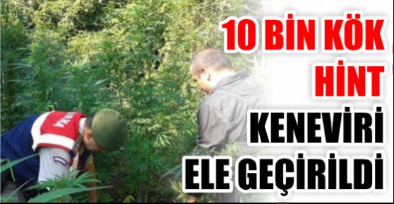 10 bin kök hint keneviri ele geçirildi