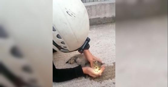 Büyükşehir İtfaiyesi Yavru Kediyi Hayata Döndürdü