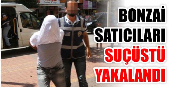 Bonzai satıcıları suçüstü yakalandı