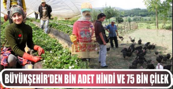 Büyükşehir'den bin adet hindi ve 75 bin çilek dağıtımı