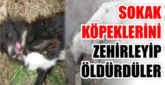 Gölkaypark'ta köpekleri katlettiler!