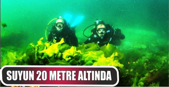 Karamürsel'deki resif canlılığı arttırdı