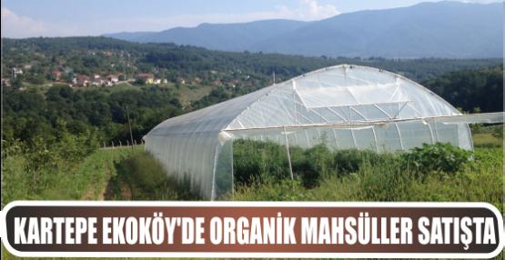 Kartepe Ekoköy'de organik mahsüller satışta